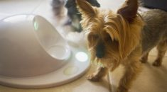 GIVEAWAY / Win a CleverPet, the game console for your dog!